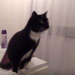 Il gatto e lo specchio: storia di un video divertente che ha spopolato in rete