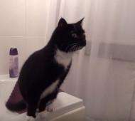 gatto specchio