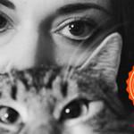 I gatti di Silvia: maestri zen e star della community