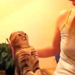 I 5 gatti più famosi di YouTube