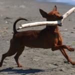 Bastoni e pezzetti di legno: un pericolo per i cani