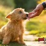 I cani più affettuosi vivono in un canile