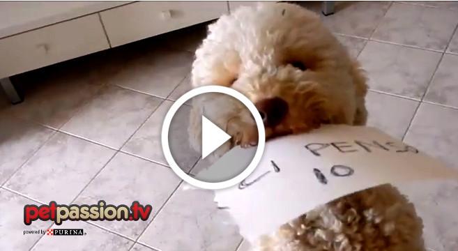 video divertente cane