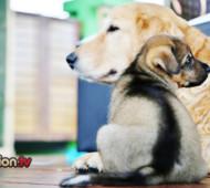 cucciolo e cane adulto