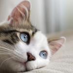 Necessità del gatto anziano