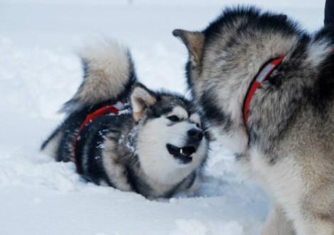 Fa un freddo cane