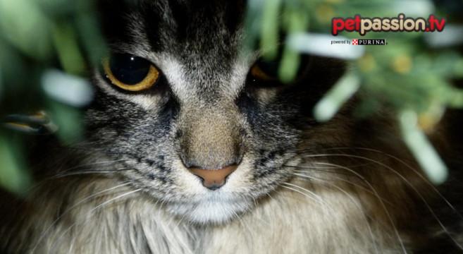 gatto-albero-natale