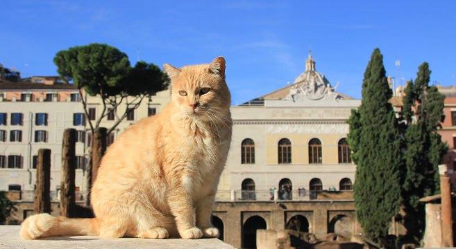 Gatti di Roma: la colonia felina di Torre Argentina