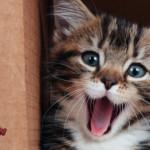 Il mio gatto è felice? Ecco 5 segnali da osservare…