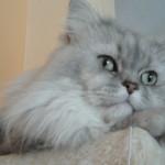 Sognare gatti e gattini: ecco i possibili significati