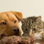 Cani e gatti: consigli per la pappa delle feste.