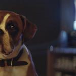 Un cane protagonista dello spot di Natale di John Lewis [video]