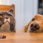 Alimentazione cane e gatto: cibi pericolosi da evitare