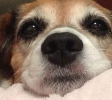 Perché i cani hanno paura dei botti