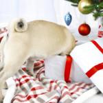 Regalo per cani: giochi fai da te