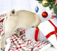 Cane regalo fai da te