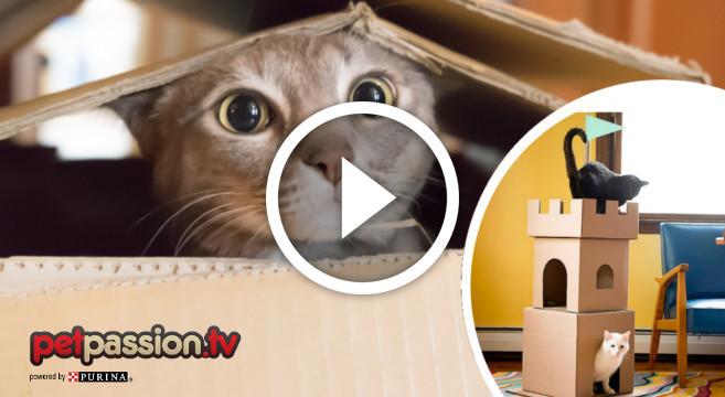 castello per gatti