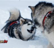 freddo-cane