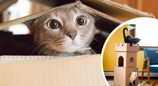 gatto-castello