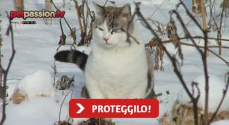 gatto-colonia-freddo