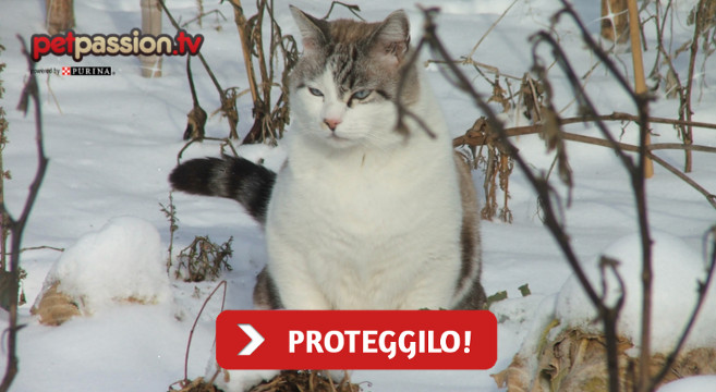 Colonie feline: come proteggere i gatti dal freddo