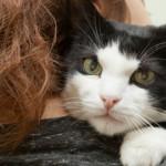 I gatti fanno i dispetti?