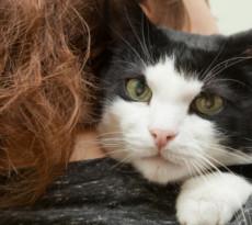 i gatti sono animali dispettosi?