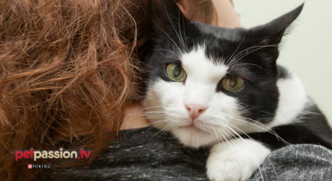 gatto-solo-a-casa