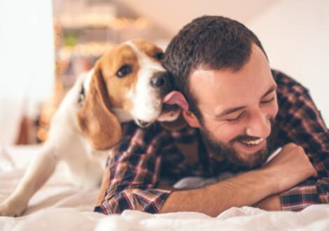 affetto-cane