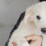 Cerchi un cane? Ecco 5 splendidi cuccioli in adozione!