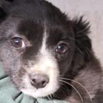 Cerchi un cucciolo da adottare? Salvalo dal canile!