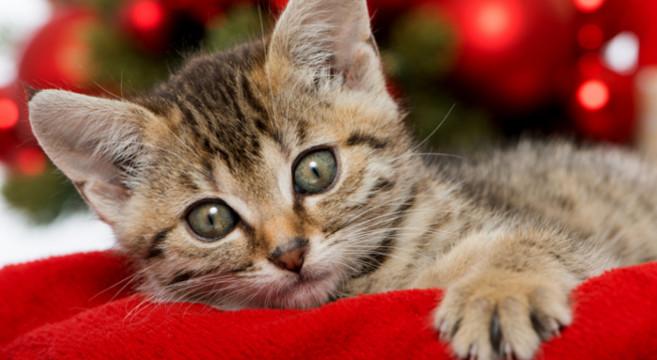 gatto-leggenda