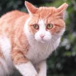 6 cause di stress nei gatti