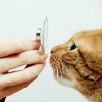 Gatto e visita dal veterinario: come ridurre lo stress.