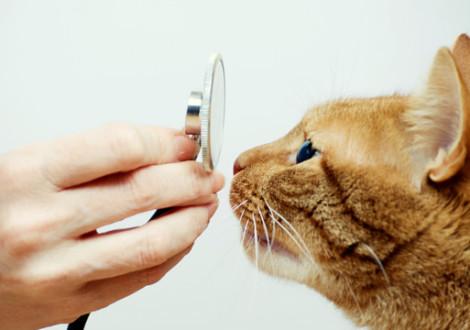 gatto-veterinario