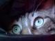 Gatto-sguardo-occhi