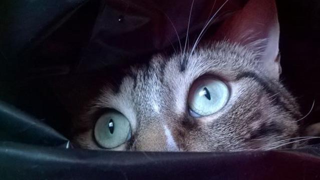 Perché il gatto guarda fisso nel vuoto?