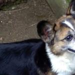 Adozioni del cuore: adotta un cane adulto