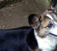 adozione-cane-anziano