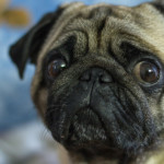 5 cose che NON piacciono al cane
