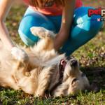 Perché il cane muove la zampa quando gli gratti la pancia?