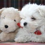7 domande da porsi prima di adottare un cane