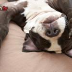 Educazione del cane: gli errori più comuni