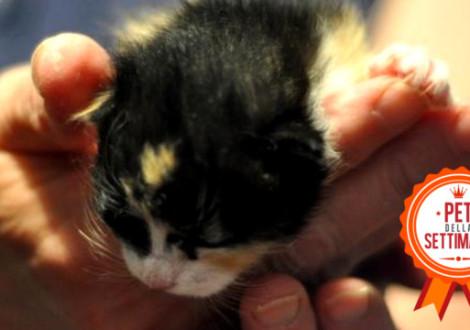gattino-fiv