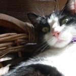 Fotografare il gatto: come scattare foto perfette
