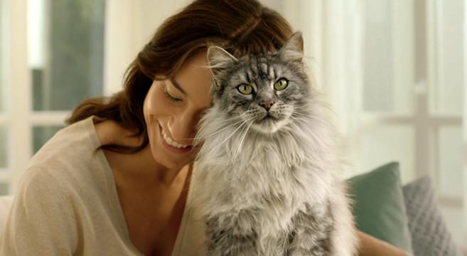 Come migliorare le difese naturali del tuo gatto