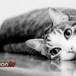Perchè il gatto si strofina contro le persone?