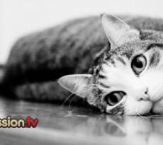 gatto-strofina