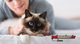 gatto-umano-riferimento