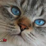 Perché i gatti perdono il pelo?